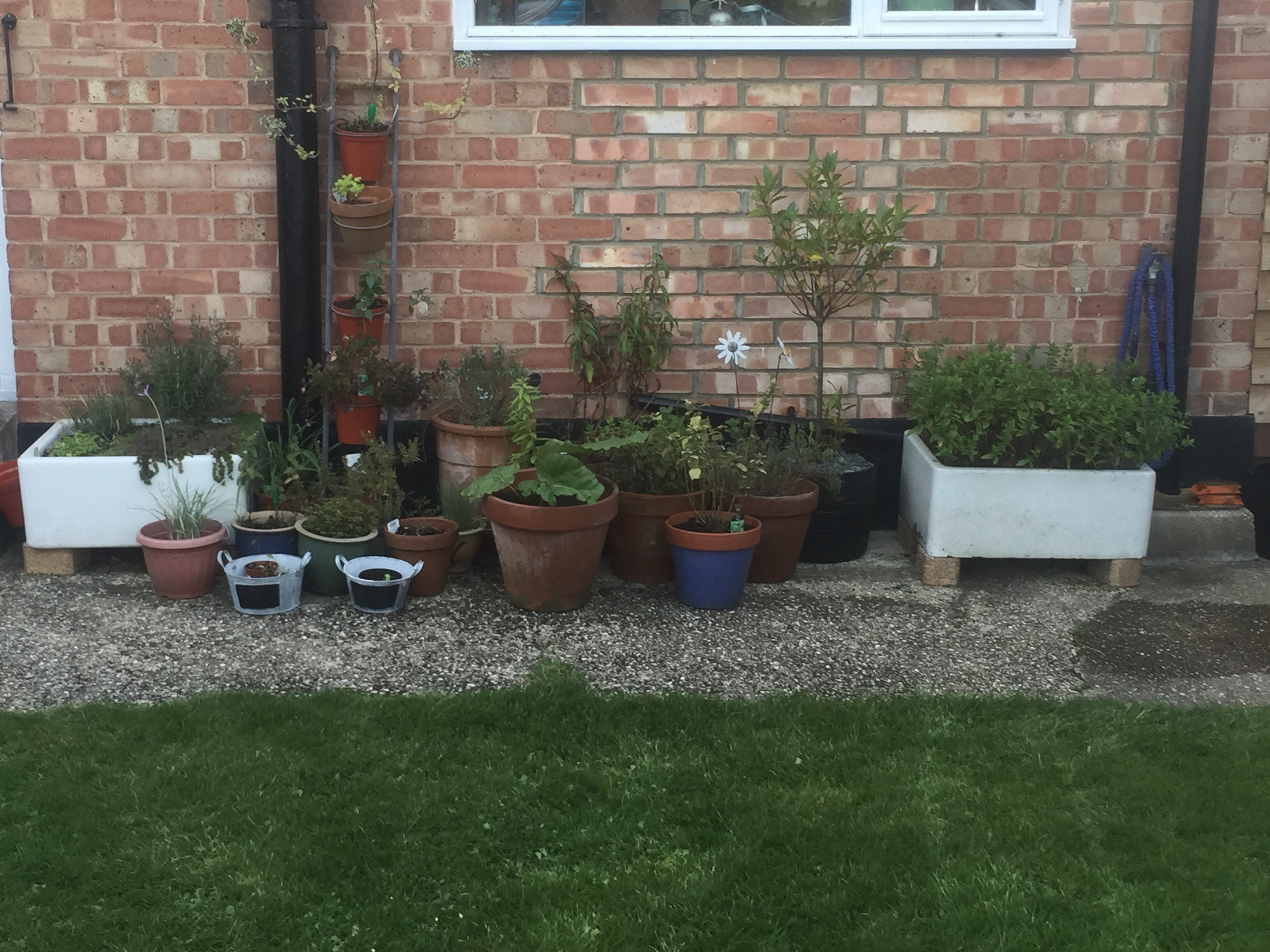 My herb collection at home in September 2015