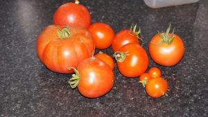 Some lovely tomatoes