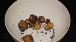 Disappointing potatoes.