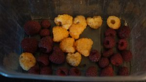 Autumn raspberries