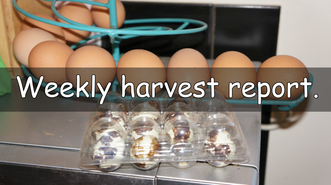 It's time for the Weekly harvest report