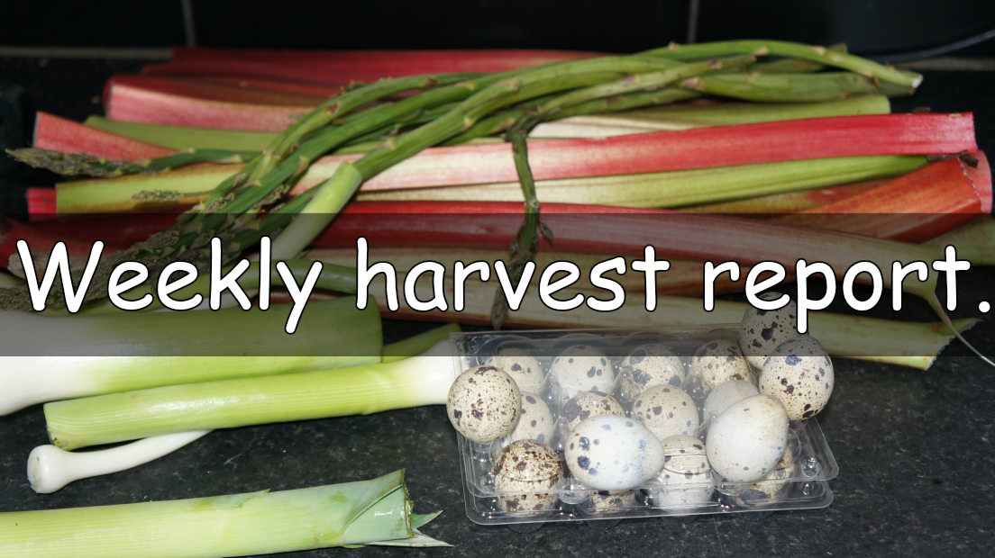 Every week I like to share a weekly harvest report. Sharing what I have harvested from my garden and allotment and how much that would of cost from a shop.