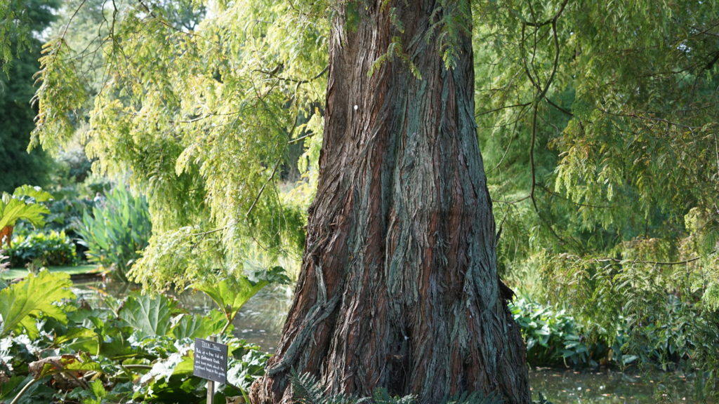 A tree trunk i really liked at beth chatto's garden