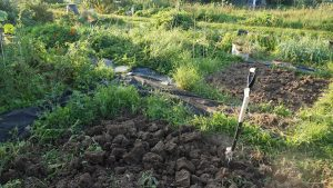 Preparing the ground for the next season.