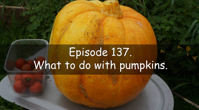 Episode 137 of the veg grower podcast. what to do with pumpkins.