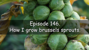 Join me in episode 146 of the veg grower podcast. This week I discuss how I grow Brussels sprouts.