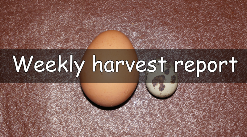A weekly report on what has been harvested this week.