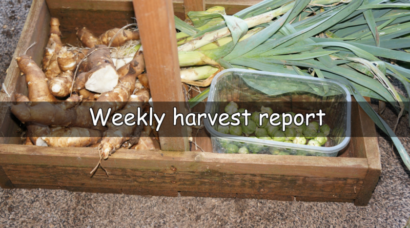 A weekly look at what I have harvested this last week.