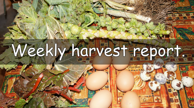 It's that time of the week to report what I have harvested this week.