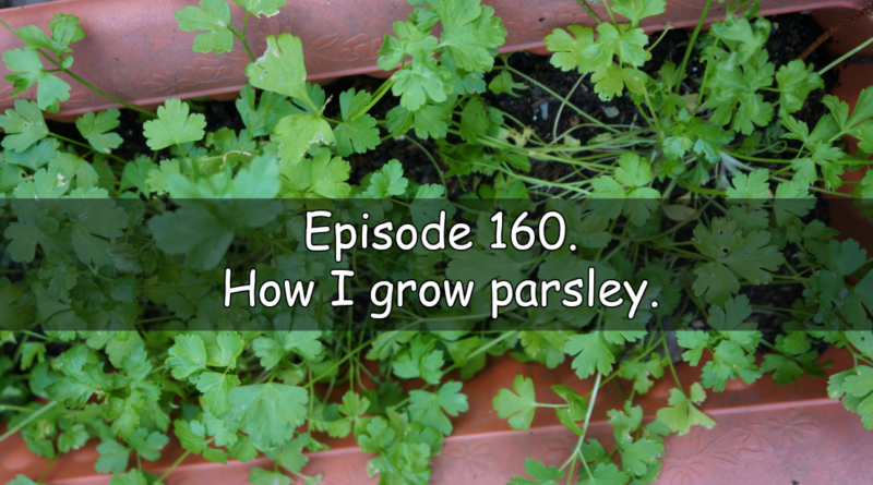 In this week's podcast, I share the latest in the allotment and vegetable patch as well as discuss how I grow parsley.
