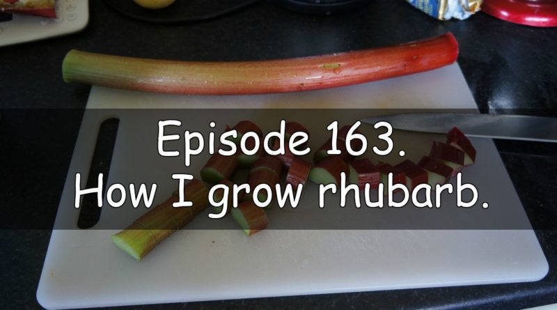Join me in episode 163 of the veg grower podcast where I discuss how I grow rhubarb. I also discuss the latest on the plots.