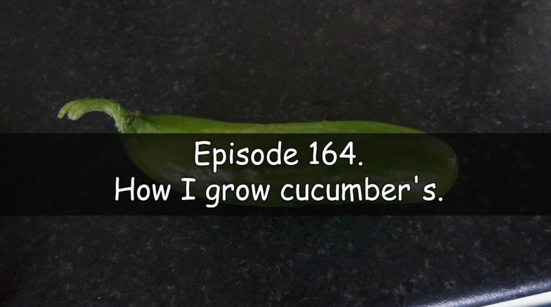 Join me in this week's vegetable growing podcast where I will be talking about how I grow cucumbers. We also cover whats been happening thisweek on the plots.