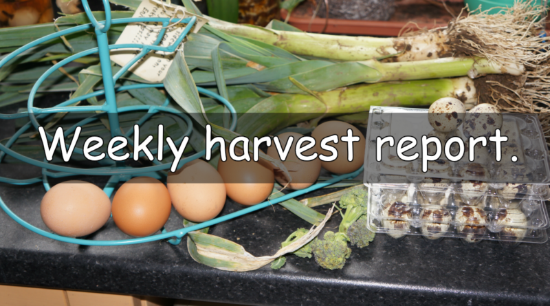 Weekly harvest report.