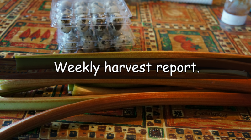 It's time for our weekly harvest report. A weekly look at what has been harvested from our plots this last week and how much that would cost in the shops.