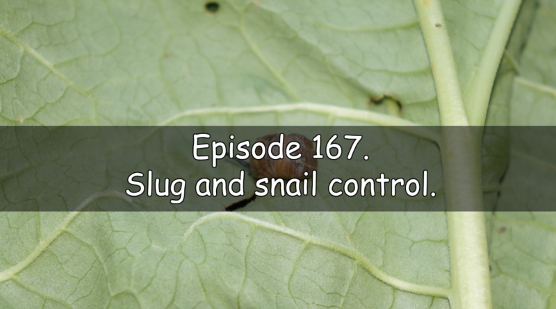 Join me in episode 167 from the veg grower podcast where I will be discussing my methods of slug and snail control as well as the diary where I discuss what been happening on the allotment and vegetable patch this last week.