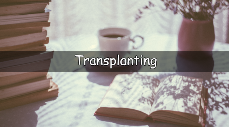 It's Wednesday which means its time to look at my understanding of a horticulturalword or term. This week I am looking at theword transplanting.
