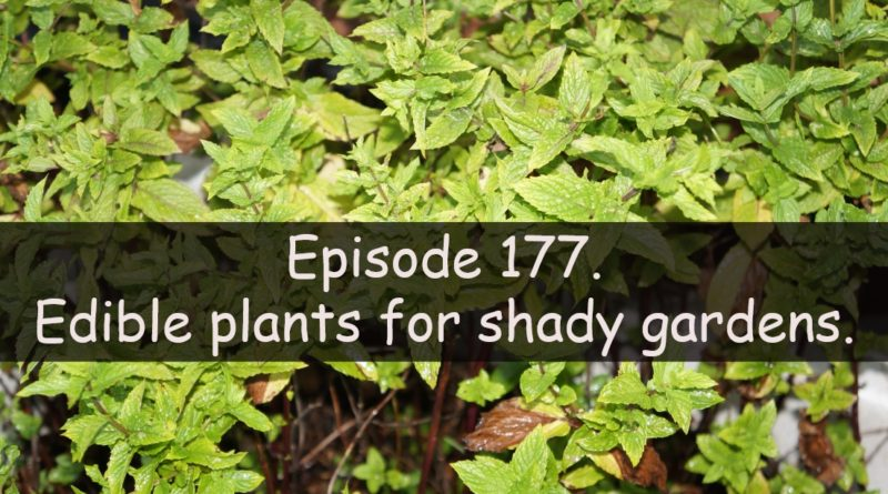 Join me in this week's podcast where I discuss a edible plants for shady gardens. I also discuss the latest on the allotment and vegetable patch.
