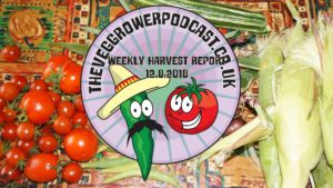 Each week I like to share my weekly harvest report. Reporting what has been harvested and how much that would cost if bought from a shop.