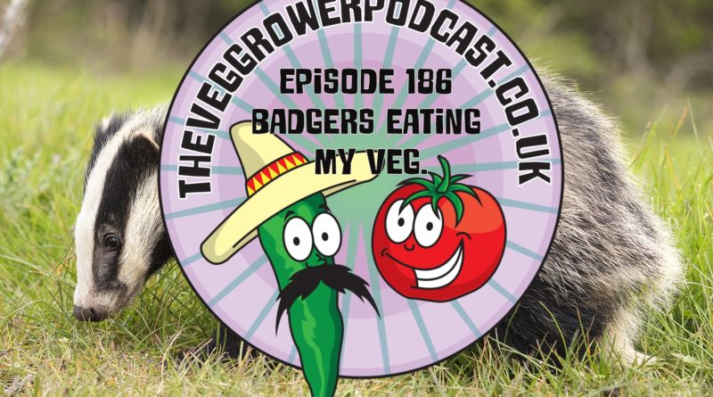 In this week's podcast a listener asks what can be done about badgers eating our veg. I also share the latest on the plots.