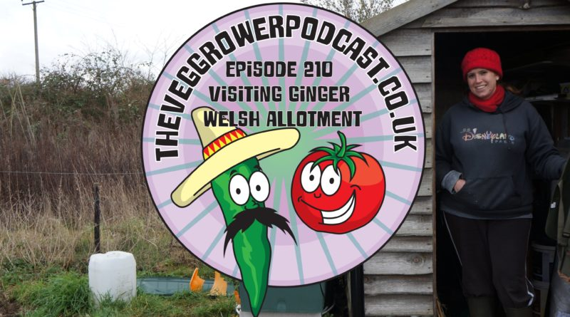 In this weeks podcast I have taken a tour fellow allotmenteer and youtuber Bethan from Ginger welsh allotment. We also have the latest from my plots.