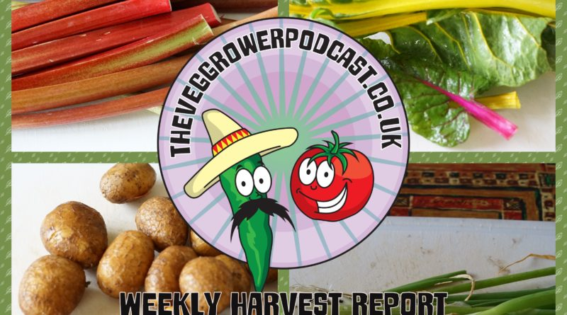 Each week I like to share my weekly harvest report. Reporting what I have harvested over the last week and seeing how much that would have cost from a shop.