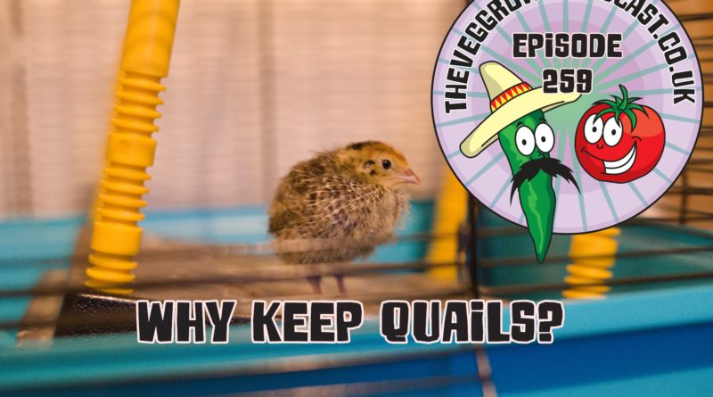 Join me in this weeks podcast where I discuss why I think quails are great in small gardens especially if your unable to keep chickens.