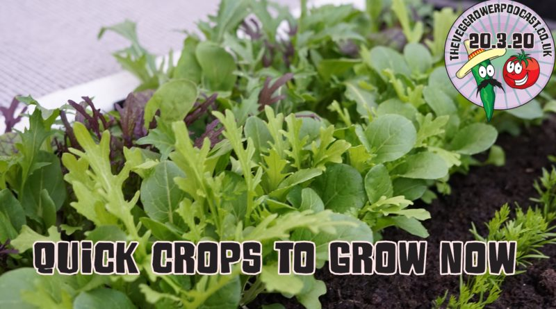 Join me in this extra podcast where I share my ideas for some quick crops to grow now. This podcast is produced in light of the current circumstances we find ourselves in.
