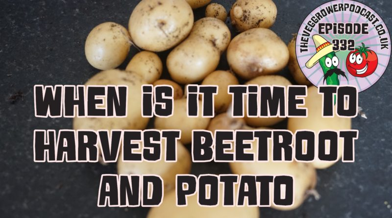 When is it time to harvest beetroot and potatoes?